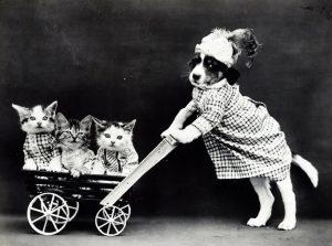 kat in hondenbuggy